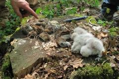 Sortie Hulotte à Cîteau (21) - film sur la biodiversité avec Alterre